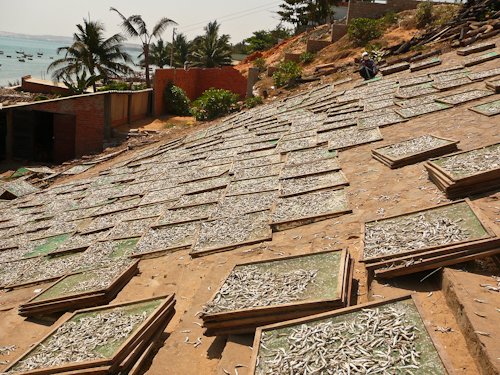 Drying Fish, Mui Ne, Vietnam