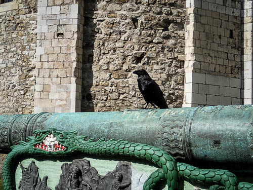 Raven of the Tower of London
